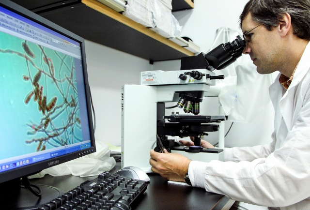 Las infecciones por el hongo llamado Candida auris pueden causar enfermedades graves.