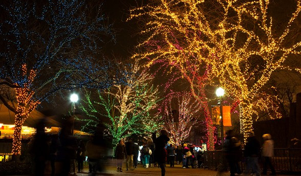 El Zoológico Lincoln se llena de luces en la temporada navideña.