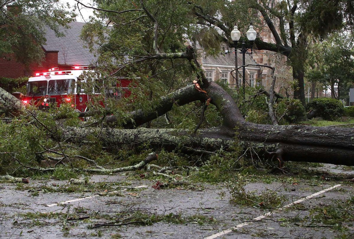 Los árboles caídos y las líneas eléctricas se encuentran entre los daños causados por la tormenta al norte y noroeste de la ciudad. Foto Impremedia