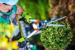4 herramientas y equipo que necesitas si vas a comenzar tu propio negocio de jardinería