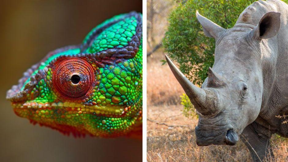 Por qué la seguridad en internet debería ser más como un camaleón que un rinoceronte