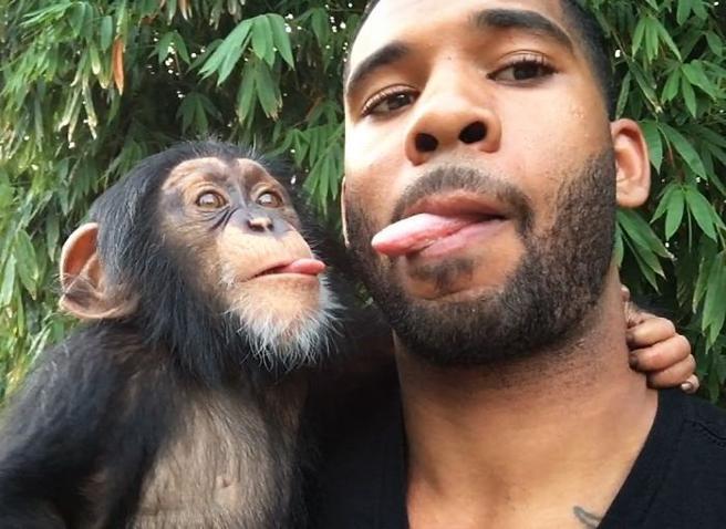 Un chimpancé usa Instagram y se convierte en fenómeno viral