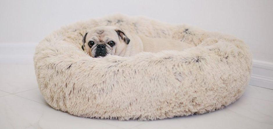 Las 7 mejores camas acolchadas para que tu perro descanse como príncipe
