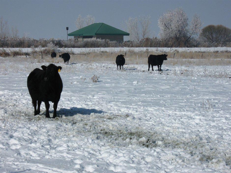 Tormenta de nieve atraviesa las Grandes Llanuras antes de la cosecha y deja pérdidas