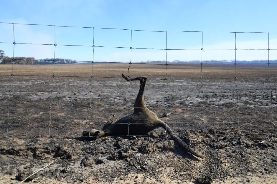 Cambio climático, la prioridad postergada