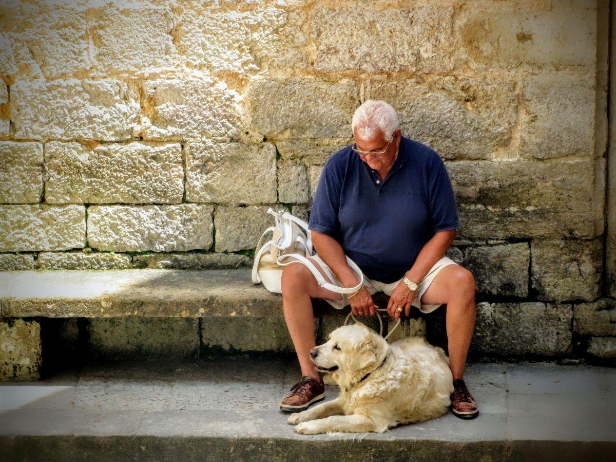 Los perros son una excelente compañía para los ancianos por múltiples razones.