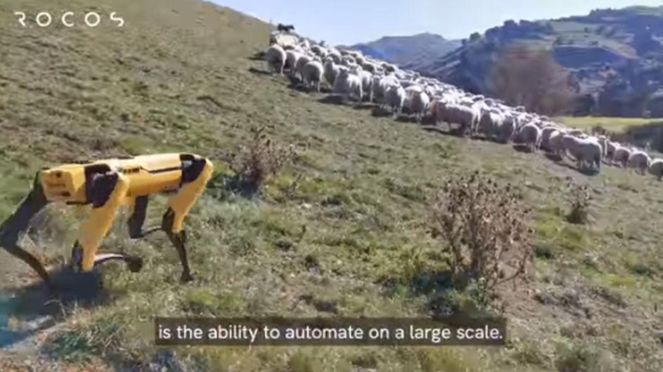 ¡Ni en las películas! Perros robots para pastorear ovejas