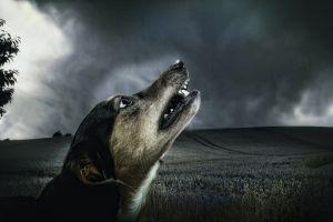 Perros salvajes matan a una médica en Georgia