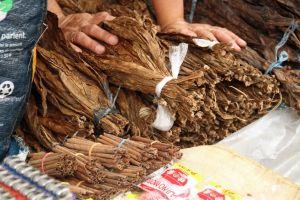 El tabaco, estimulante de indígenas y llevado a Europa por Colón