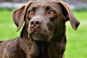 """""""Asaltan"""" a perro que ayuda a hacer mandados durante la cuarentena en Colombia"""