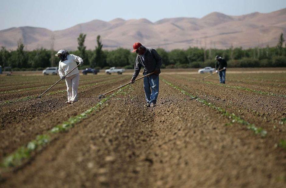 Salud o dinero: El dilema de los trabajadores indocumentados que alimentan a California