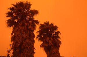 """""""Esta mañana desperté en Marte y no en el norte de California"""""""