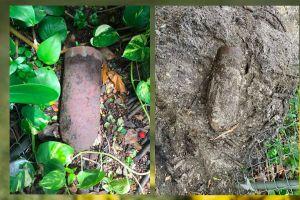 Encuentran un antiguo dispositivo militar enterrado en un jardín privado de Miami