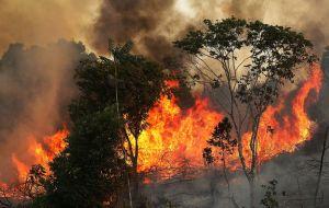 """Brasil declara """"estado de calamidad"""" por incencios"""