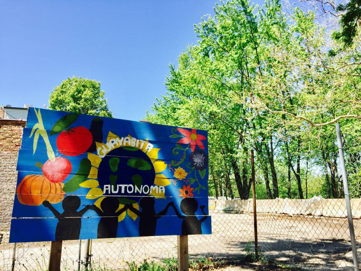 Vecinos cultivan el jardín comunitario La Guayabita Autónoma en Albany Park. (Cortesía)