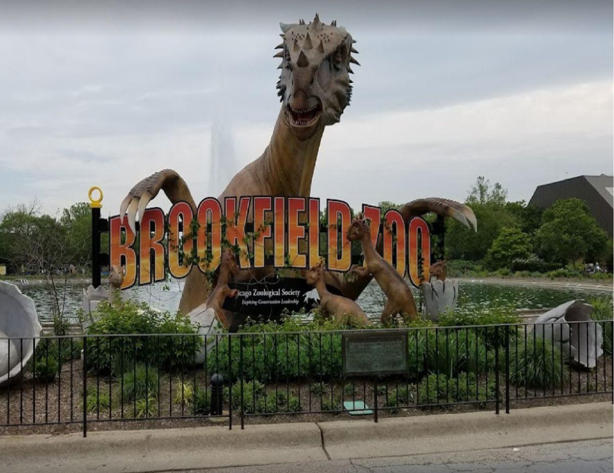 El zoológico Brookfield está abierto de 10 am a 5 pm entre semana y de 10 am a 6 pm los fines de semana. Foto Cortesía Zoológico Brookfield